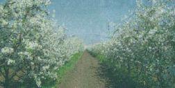 Об особенностях обрезки вишни